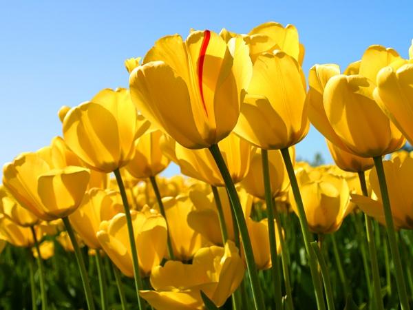 DIEU ETERNEL nous Vous glorifions avec joie